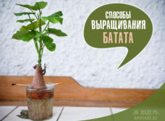 проращивание