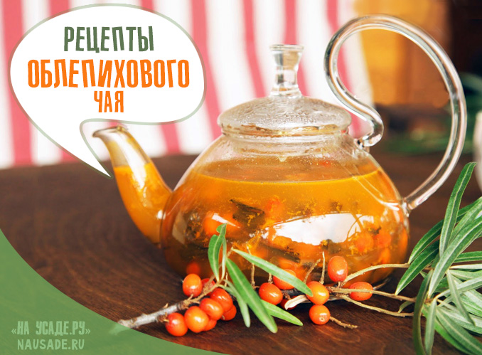 Облепиховый чай: рецепты заваривания и приготовления