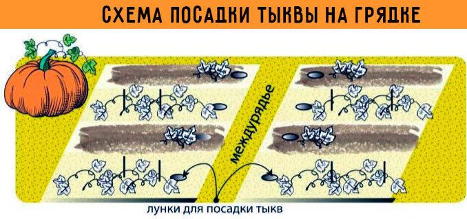 схема высадки